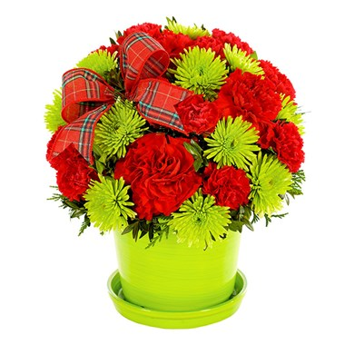 Holly Jolly Wishes flower bouquet (BF291-11KM)